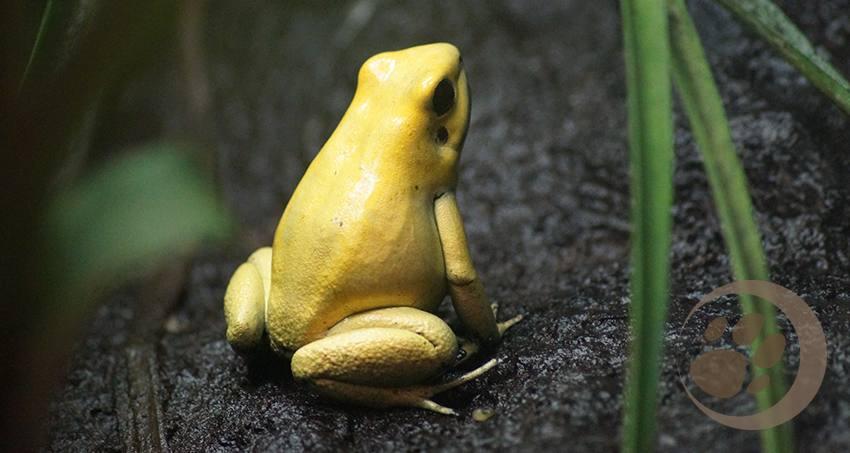 Frösche und Kröten