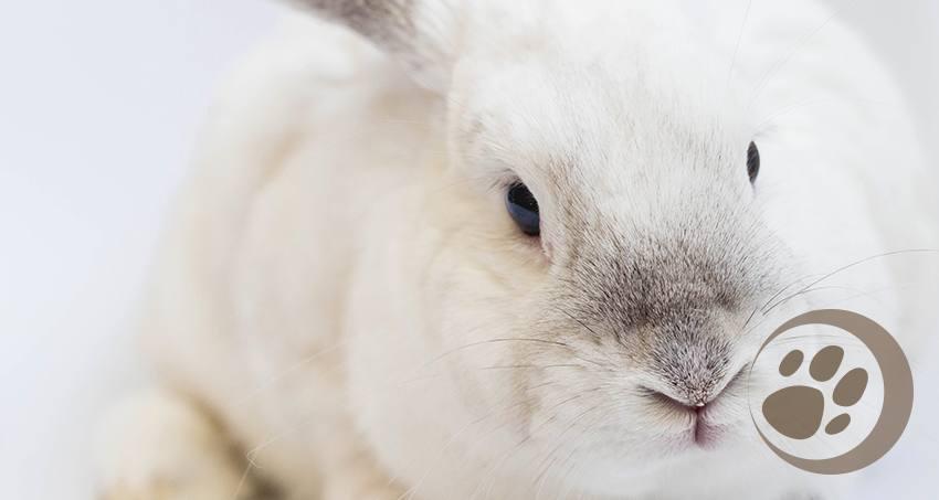 Fakten über  Kaninchen