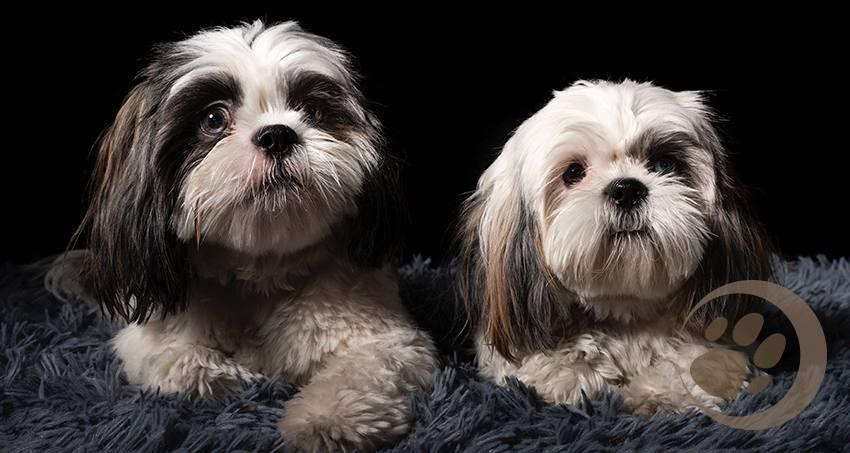Kosten für Hunde