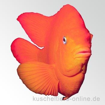 Arten der Aquaristik