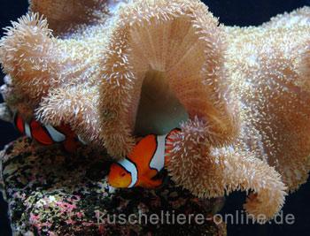 aboutpixel.de / Finding Nemo © Helge Eisenberg