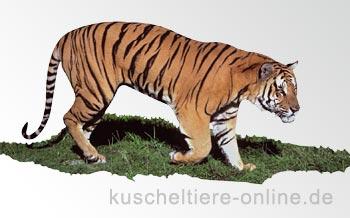 Groß-Katzen