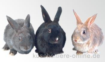 Das Wesen der Kaninchen