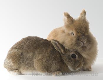 Herkunft der  Kaninchen