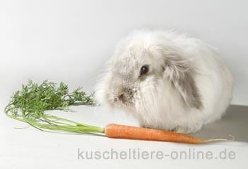 Kosten für Kaninchen