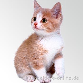 Fakten über die Katze