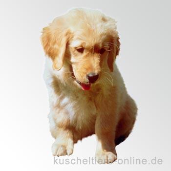 Labrador Hunde