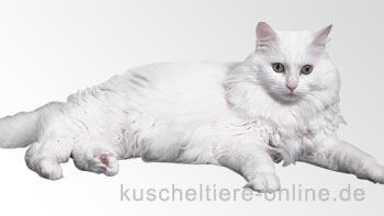Herkunft der Katzen