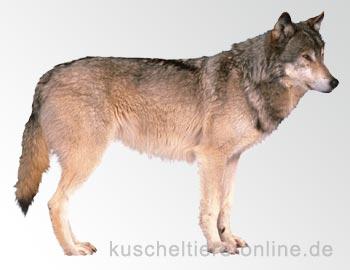 Alle Hunde waren mal ein Wolf